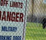 Military Working Dogs Train to Sustain Mission Support
