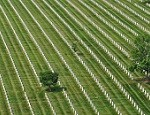 Arlington National Cemetery Continues Improvements, Director Testifies