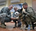 Kentucky Army National Guard Medic Helps with Better Care for Military Dogs
