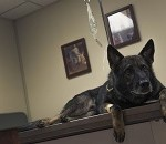 Vet Clinic Supports MWD Program With Care, Training