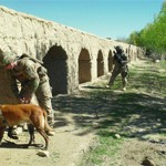 Mine Dogs Clear Afghan Roads