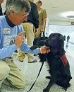 Psychiatric Service Dogs Helping Veterans with PTSD