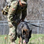 Engineer Unit With Mine Detection Dog Program Unique to DOD