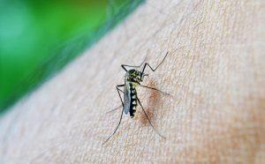 Zika Research