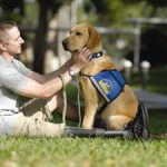 PetSmart Expands Third Annual Special Patriotic Services, Gives to Canine Companions for Independence