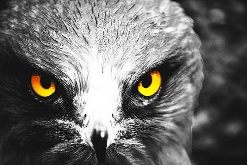 Eagle Eyes Program