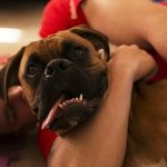 Why Dogs Are Commonly Used To Cope With PTSD