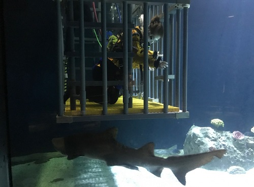 Shark Therapy