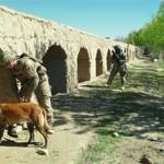 Mine Dogs Clear Afghan Roads