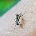 Army Labs Get More Funding for Zika Research