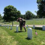 DoD Honors Fallen Service Members for Memorial Day