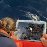 Coast Guard Releases 200+ Sea Turtles Off Florida