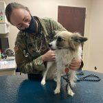Plan Ahead When PCS Involves Family Pets